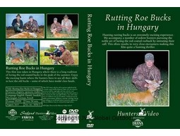 Rutting Roe Bucks in Hungary